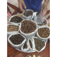 assortment of insects to eat in Thailand'
